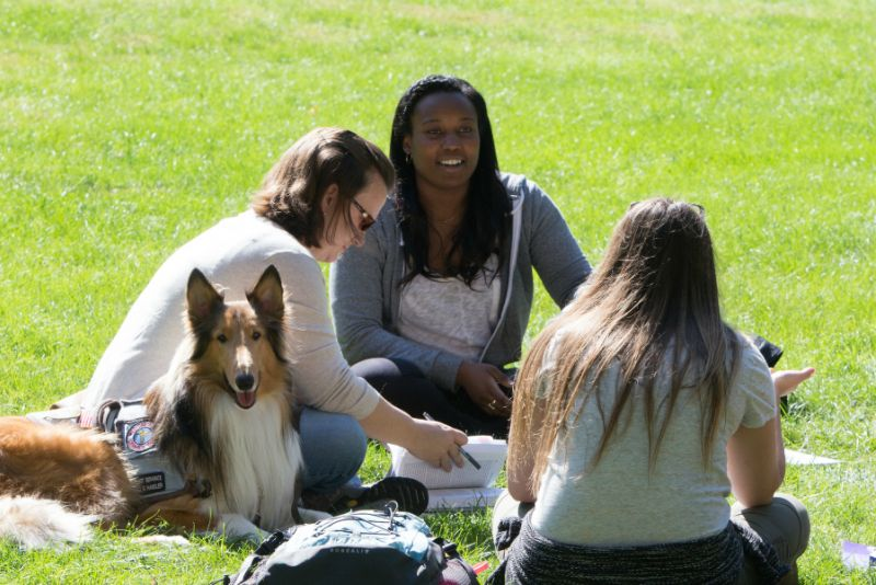 Three students and a collie dog sitting in the grass on the quad, studying together.